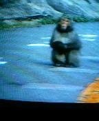 猿パート2